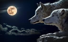 あなたは嘘を見破れるか⁉️     ✨✨🎊人狼交流会🎊✨✨@